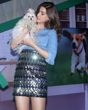Photos: Kriti Sanon At The Mars Petcare Event At Tote Mahalaxmi | Picture 1709672