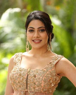 Nikki Tamboli - Thippara Meesam Movie Press Meet Photos
